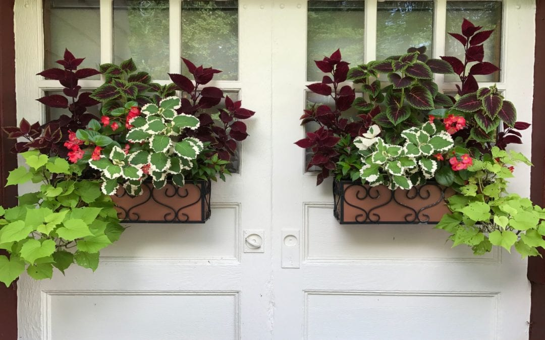 Planter / Window Boxes